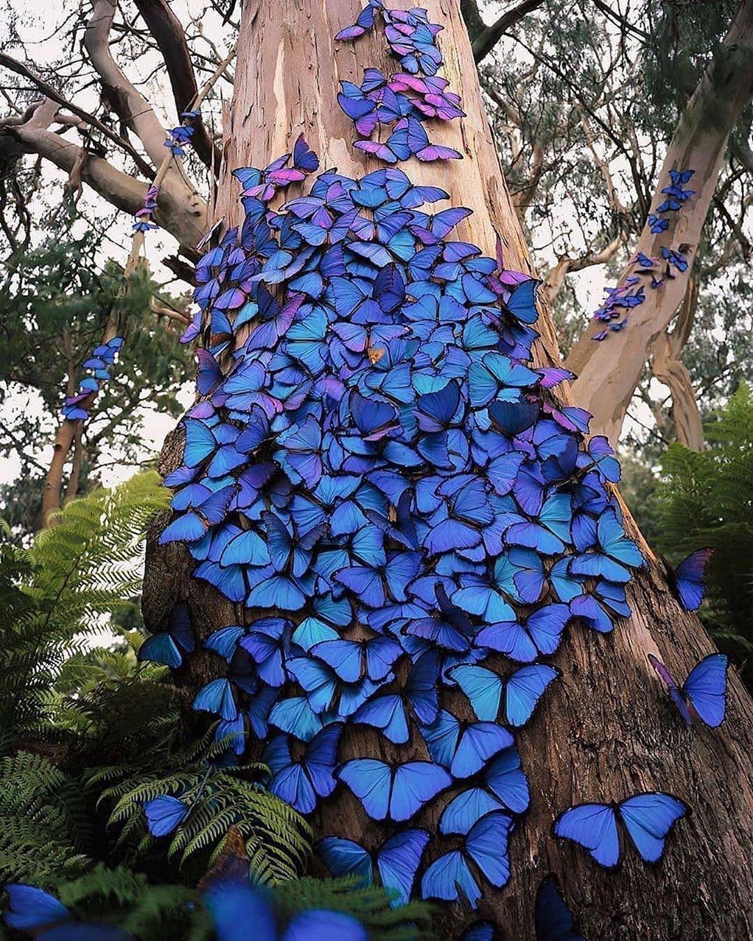 L'arbre papillon..   Photo: @kelvinhudson